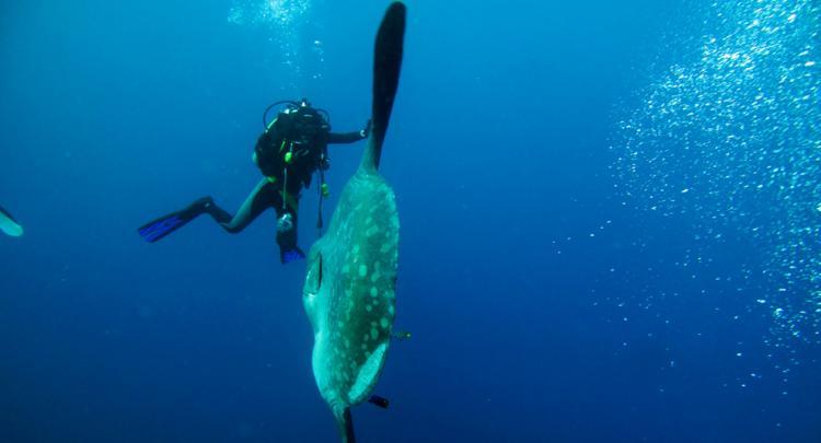 Bali Dive Resort And Spa